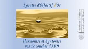 Académie Coach Olfactif - 1 goutte d'Olfactif d'Or